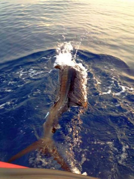 29  fisherman pro 012